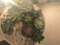 Succulents in the lobby